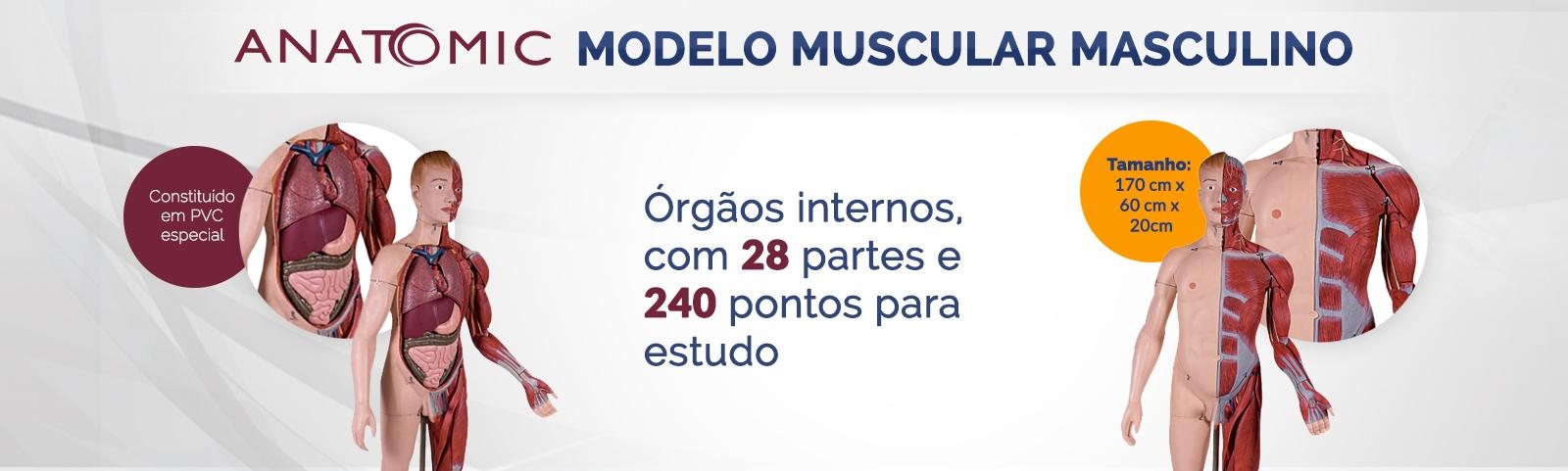 Manequim Muscular, Masculino, com 170 cm, em 28 Partes e Órgãos Internos