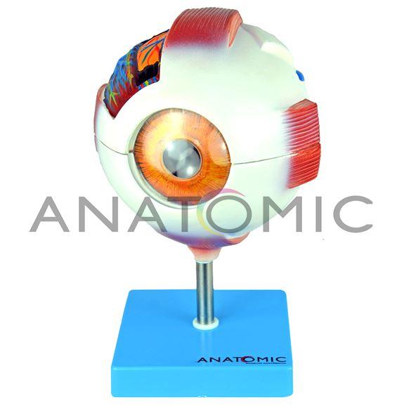 Anatomia do Olho, em 8 Partes