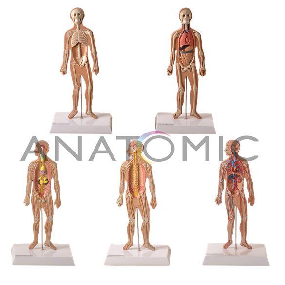 Conjunto de Pranchas para Iniciação ao Estudo Anatômico dos Principais Sistemas do Corpo Humano