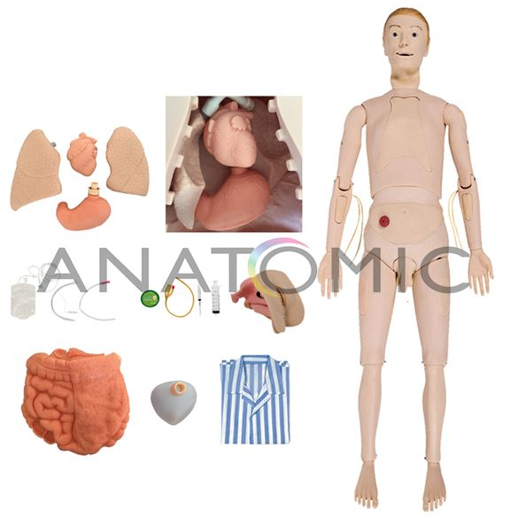 Manequim Bissexual com Órgãos Internos, Simulador para Treino de Enfermagem
