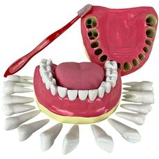 Dentição com Todos os Dentes Removíveis - TGD-0312-C