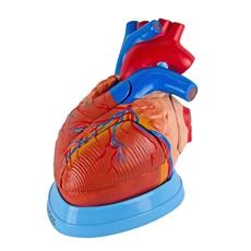 Coração Ampliado, em 5 Partes - TGD-0322-A