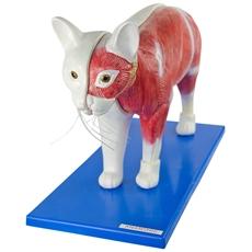 Anatomia do Gato - TGD-0602-O