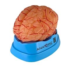 Cérebro com Artérias, em 9 Partes - TZJ-0303-A