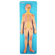 Sistema Nervoso em Placa - TZJ-0328-B