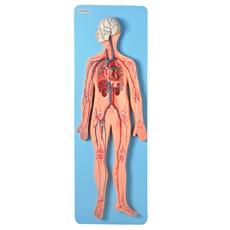 Sistema Circulatório Luxo - TZJ-0328-DZ