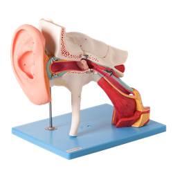 Ouvido Ampliado, Clássico, em 8 Partes - TZJ-0309-E