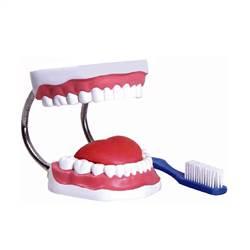 Arcada Dentária com Língua e Escova - TZJ-0312-B